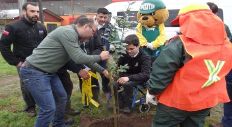 Renaico comienza arborización
