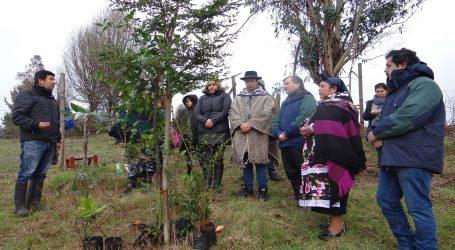 Conaf entrego árboles nativos para proteger menocos y recuperar lawén a machis de Padre Las Casas