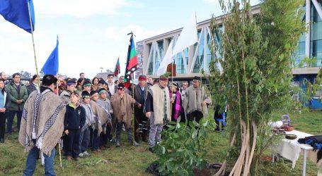 Servicio local de educación Costa Araucanía celebro el We Tripantu