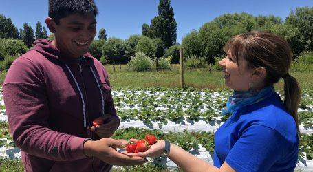 INDAP Araucanía apoya emprendimientos de jóvenes
