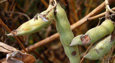 Más de $165 millones en indemnizaciones han recibido pequeños agricultores de La Araucanía