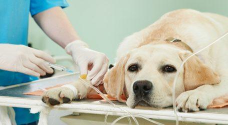 Victoria contará con clínica veterinaria móvil municipal