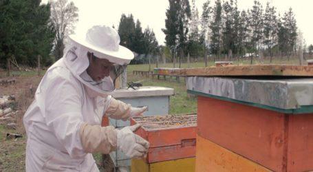 Municipalidad de Victoria Lanza historias de Agricultores PDTI