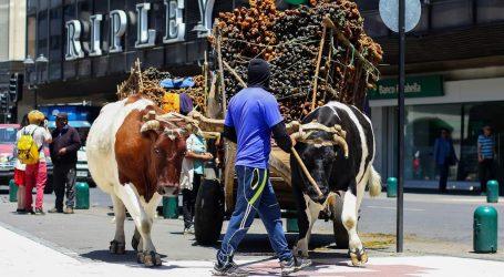 Más de 80 fardos de trébol fueron entregados a los cochayuyeros que están en Temuco