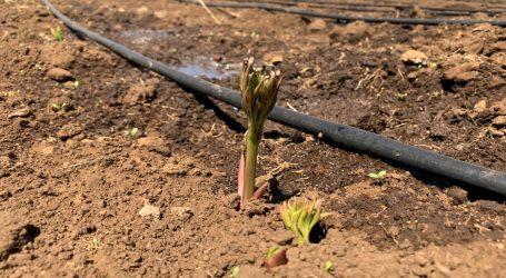 Indap abrió concursos para mejoramiento de suelos en provincias de Malleco y Cautín