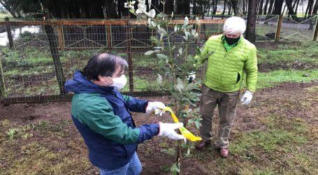 Conaf entrega 500 árboles nativos para ser plantados en parque Isabel Riquelme de Lautaro