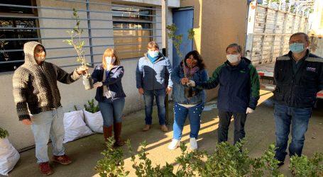 INDAP y CONAF comienzan la entrega de 9.580 plantas a pequeños agricultores de La Araucanía