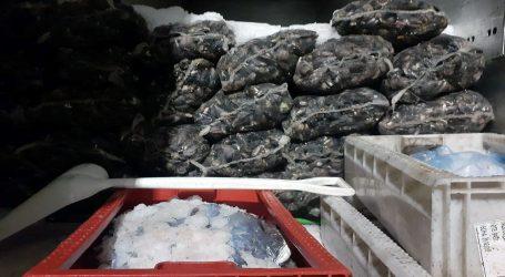 Sernapesca y Carabineros incautaron casi 9 toneladas de pesca ilegal en La Araucanía